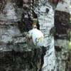 Бола с надпис Mom на фона на дърво